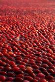 Tranbär fältet perspektiv skott — Stockfoto