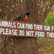 Do not feed animals sign and bird - Stock Photo