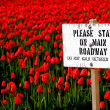 Stay off Tulips Sign and Red Tulip Field — Stock Photo