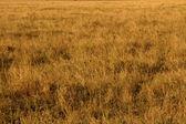 Yellow Grasslands — Stock Photo