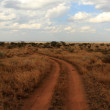 Path Through the Serengeti — Stock Photo