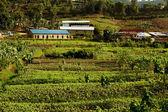 De landbouw in afrika — Stockfoto