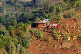 African Shanty Farm — Stock Photo