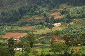 Oeganda plattelandsgemeenschap — Stockfoto