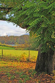 Oak Tree Frames Pasture and River — Stock Photo