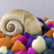 Shell with Colorful Oysters — Stock Photo