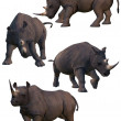 Set of four rhinos. — Stock Photo