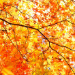 Autumn Leaves — Stock Photo #21271047