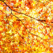 Autumn Leaves — Stock Photo #22295531
