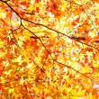 Stock Photo: Autumn Leaves