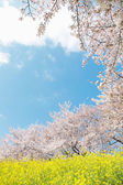 Japanese spring scenics — Stock Photo