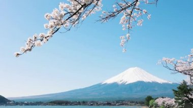 Mt. Fuji with cherry blossom — Stock Video