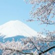Stock Video: Mt. Fuji with cherry blossom