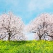 Japanese spring scenics — Stock Photo #26507367