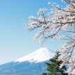Mt Fuji with cherry blossom — Stock Photo #26507481