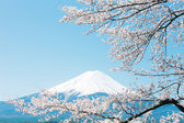 Mt Fuji with cherry blossom — Stock Photo