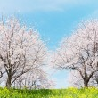 Japanese spring scenics — Stock Photo #28914965