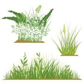 A set of floral grass design elements, vector illustration series. — Stock Vector