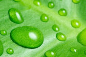 Wated drop on green leaf — Stock Photo