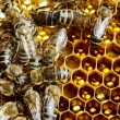 Working bees on honeycomb — Stock Photo #25003577