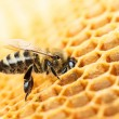 Working bee — Stock Photo