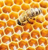 рабочая пчела — Стоковое фото