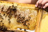 соты с пчелы — Стоковое фото