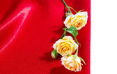 Yellow roses on silk background — Fotografia Stock