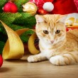Christmas cat — Stock Photo #35530005