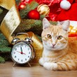 Cat wating for christmas time — Stock Photo