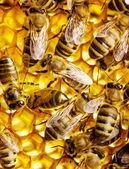 çalışma arılar — Stok fotoğraf