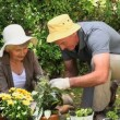 Stock Video: Old couple gardening together