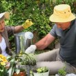 Old couple gardening together — Stock Video