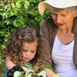 Stock Video: Grandmother and granddaughter gardening