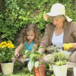 Stock Video: Grandmother and granddaughter gardening together