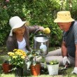 Stock Video: Old womgardening with her husband