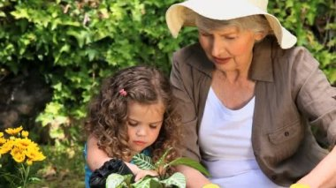 Grandmother and granddaughter gardening — Stock Video