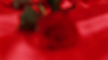 Red rose on red silk — Stock Video