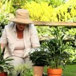 Mature woman tending to her plants — Stock Video #23496707
