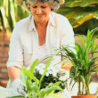 Mature woman potting plants in the garden — Stock Video #23496891