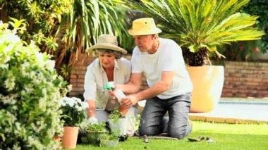 Senior couple gardening together — Stock Video