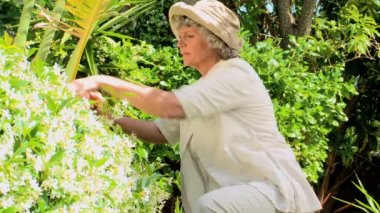 Mature woman pruning a shrub — Stock Video