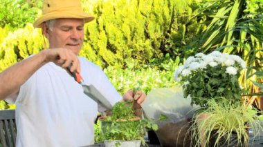 Mature man potting plants in the garden — Stock Video