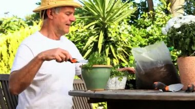 Mature man potting a plant — Stock Video