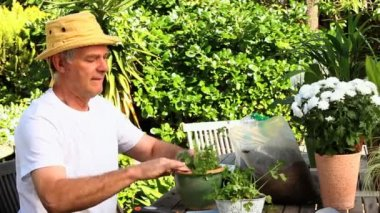 Mature man potting plants in his garden — Stock Video