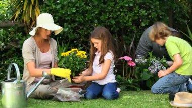 いくつかの園芸を一緒にやっている家族 — ストックビデオ