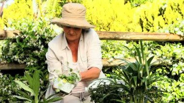 Mature woman potting plants in the garden — Stock Video