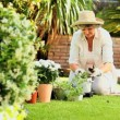 Mature woman potting a plant outdoors — Stock Video #23500361