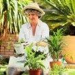 Mature woman potting plants in the garden — Stock Video #23501261