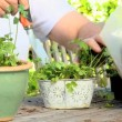 Mature man tending to his potted plants — Stock Video
